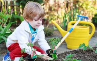 О трудовой деятельности детей дошкольного возраста